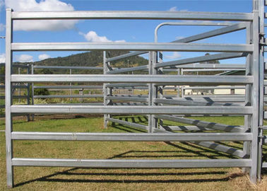 High Durable Cattle Yard Panels / Portable Gate Panels With Galvanized Pipe